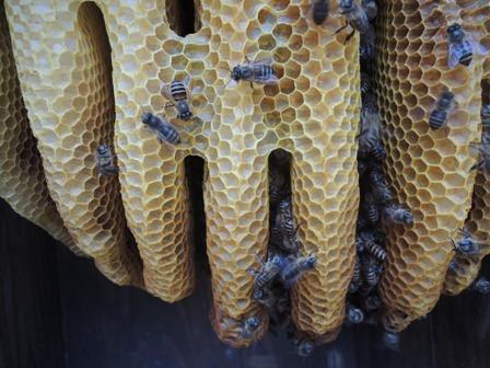 1蜂の巣DSCN1257