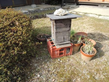 3庭の箱DSCN1296