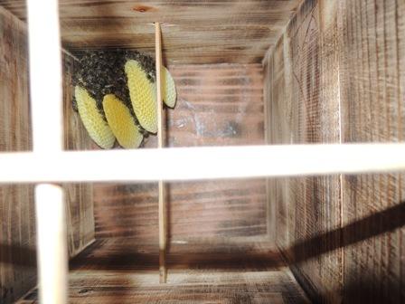 4庭の箱の巣DSCN1250