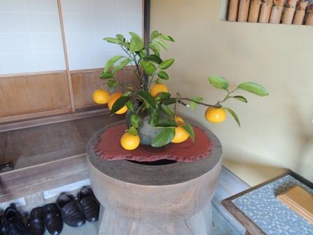 8甘夏の鉢植えDSCN1284