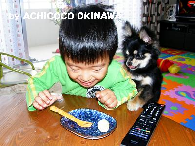 cccshibabacha15.jpg
