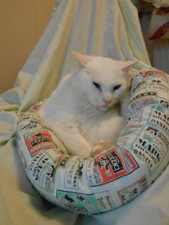 130331後藤白猫 006b