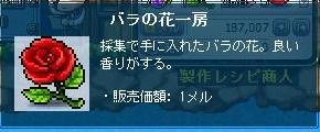 Maple111106_181307.jpg