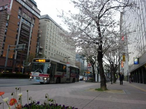 今シーズン初の桜+バス
