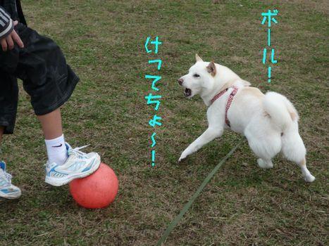 公園にて ボール待ちのやかましいあじさん