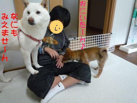 あじ@大豆家 ガン無視あじ