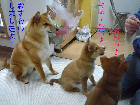 あじ@大豆家 ビシッ!!とイケメン