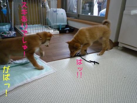 あじ@大豆家 セドナVSユア その4