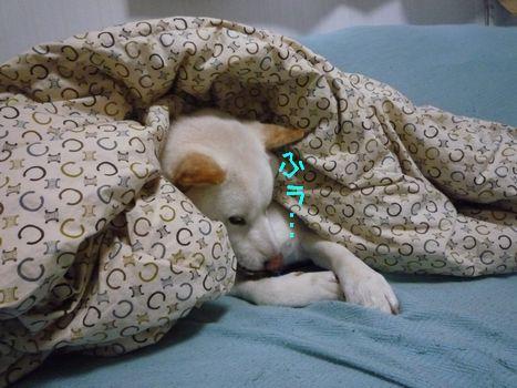 あじ@大豆家 寝る寸前。。