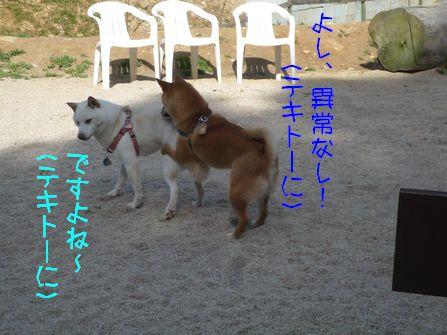 ラン→病院 大豆獣医師の触診