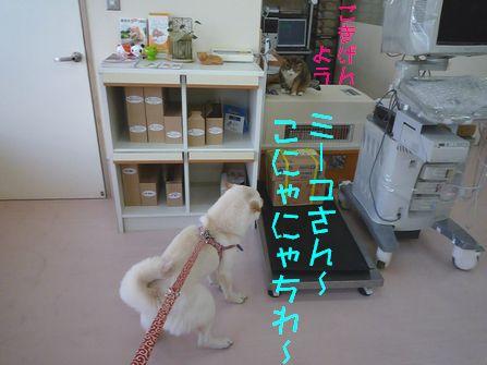 ラン→病院 ミーコさんに ご挨拶