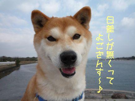 GAフリマ後 20日ふぐちゃんと朝さんぽ~♪
