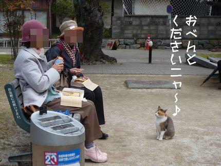 バスつあ~ ネコさん、かわいくアピール
