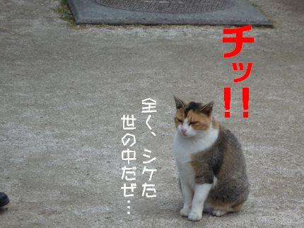 バスつあ~ 裏ネコさん