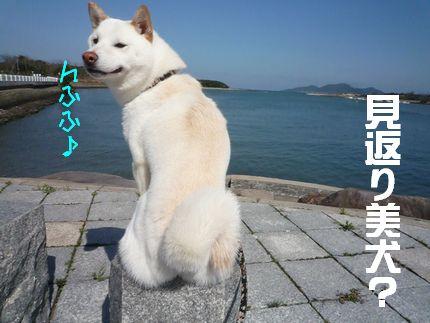blog てんぷれーと見返り美柴??^^