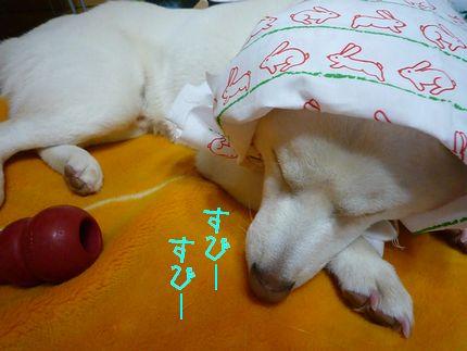 サクちゃんがキターーーー!! 寝ちゃったよ。。。