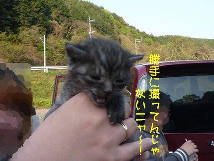 catでワンだかり レイトたんは無修正