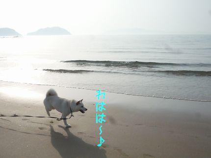 今日の海 しろい。。。