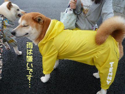 テーマカラーは黄色 嫌いな雨降り