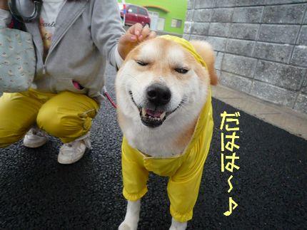 テーマカラーは黄色 照れ笑い?それとも苦笑い??