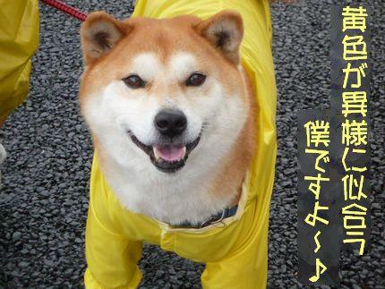 テーマカラーは黄色 笑顔のぐーふー