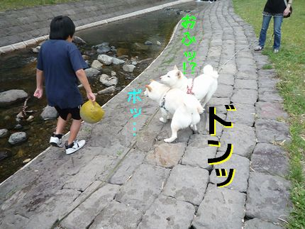 OGAWA 接触事故。。。