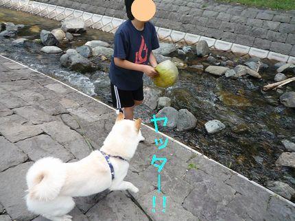 OGAWA ボールに歓喜あじさん