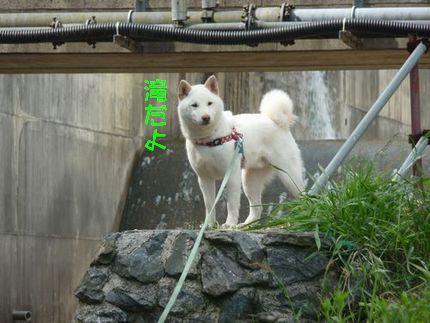 OGAWA 滝だし山だしイオンだし