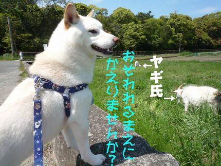 犬の散歩道さま 八木氏と!
