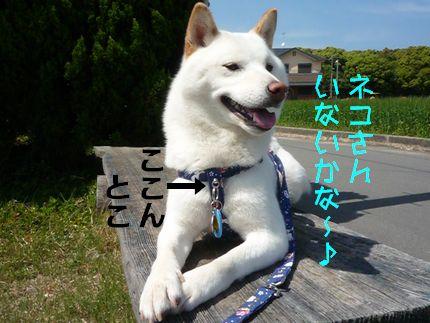 犬の散歩道さま ネコウォッチャーあじ トチカン!