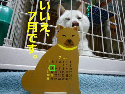 6月? みのうしば?北海道犬??かれんだー