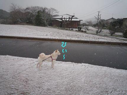 あつうございます~ 雪でございます