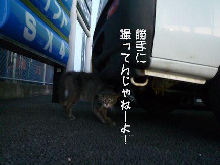 コーフンふん! 怖いネコさん、お願いです。。