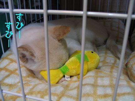 aji お魚のおもちゃの枕になって