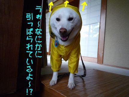 昨日のカッパ犬 見えない何かに!?
