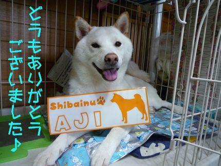zansyo どうもありがとうございました!!