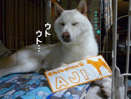 zansyo 居眠りあじさん