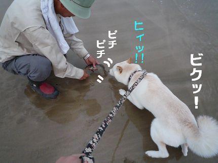 いいですとも ぴちぴちした鮮魚にビビり犬