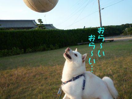 おボール遊び オー!ライ!オー!ライ!!