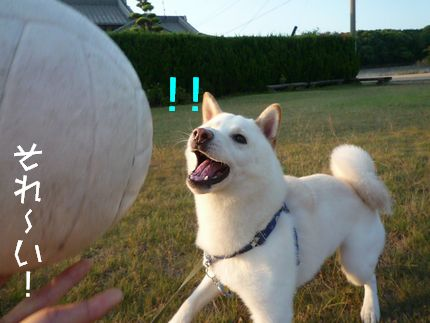おボール遊び そりゃ~っ!!