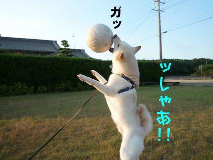 おボール遊び っしゃ~!