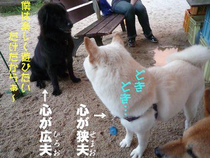 5雨柴 紳士ガイくん