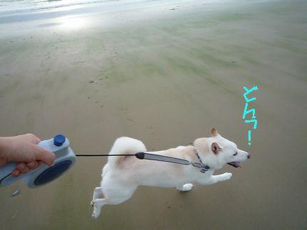 海に寄り道 よーいどん!