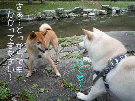 OW後川 スキが無い大豆兄さん
