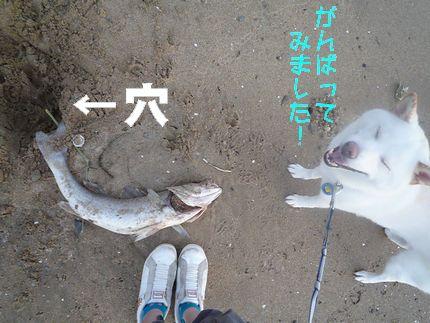 魚つづき 掘った穴と足とあじ