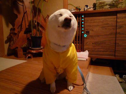 黄色カッパ犬 てんてんてん。。