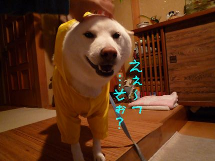 黄色カッパ犬 まんざらでもないかんじ。