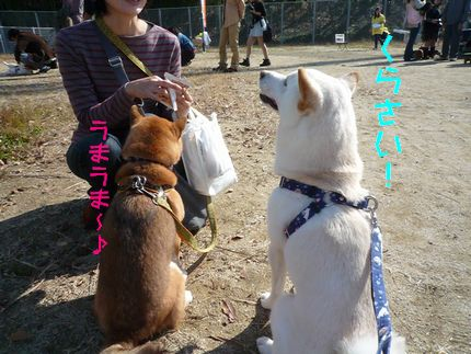 OWP21121 まめちゃん&あじ