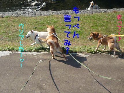 kww9柴1ラブ 無かった!!!