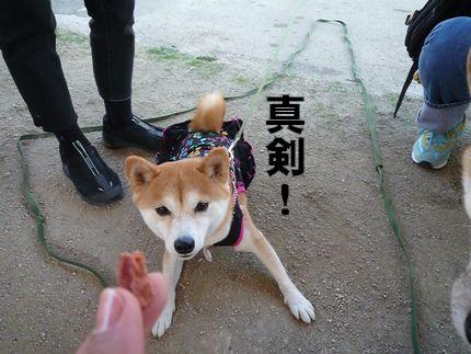 kww9柴1ラブ② 真剣10代こなっちゃん